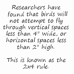 bird collision 2x4 rule