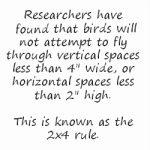 Use Window Film To Prevent Bird Collisions