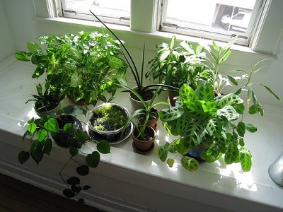 Will Window film kill my houseplants?